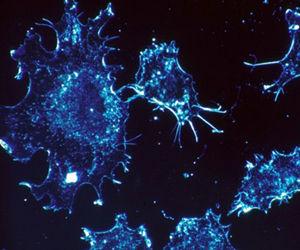 cancermutaciones-software630