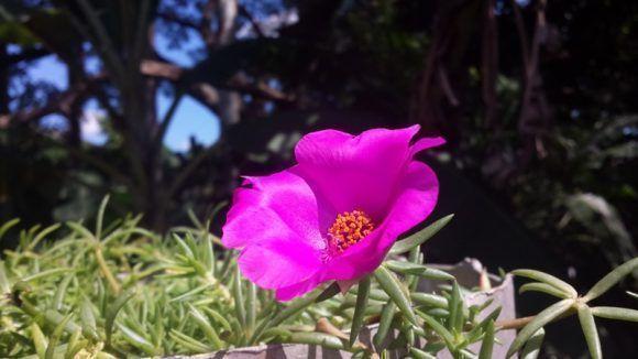 En el jardín de mi madre en Cumanayagua, Cienfuegos. Foto: Olsery Becerra Pérez / Cubadebate