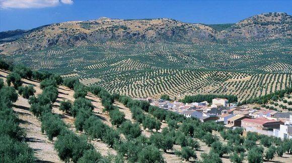 eeuu-olivas